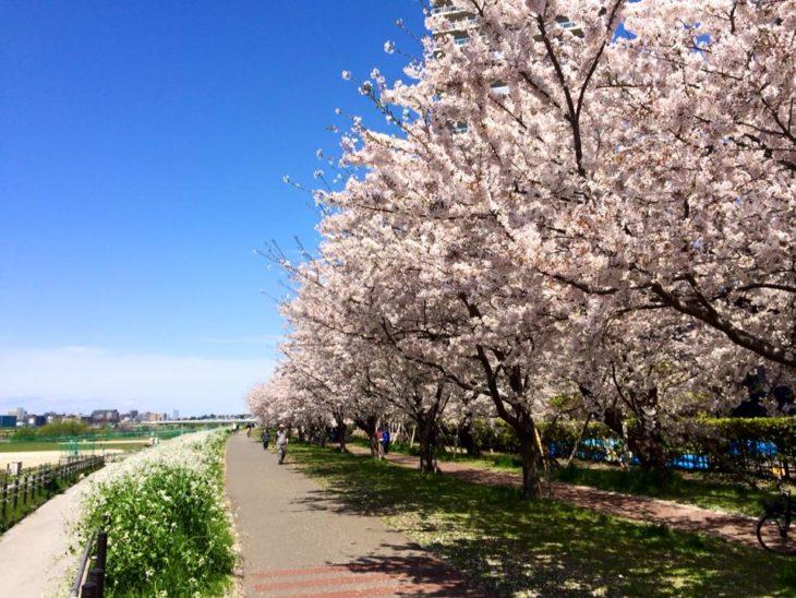 多摩川 サイクリングコース